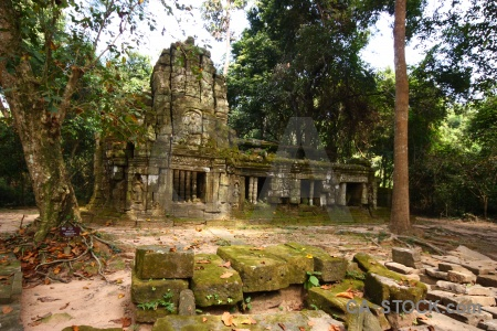 Southeast asia carving moss siem reap root.