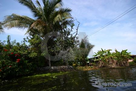 Southeast asia damnoen saduak building canal floating.