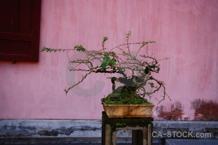 Southeast asia hue thien mu pagoda bonsai unesco.
