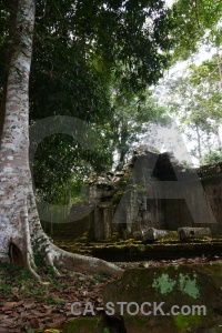 Southeast asia lichen temple khmer block.