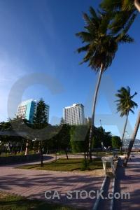Southeast asia nha trang vietnam tree palm.