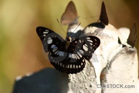 Southeast asia rock kbal spien insect butterfly.