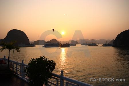 Southeast asia sea animal vietnam limestone.