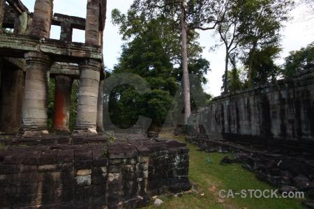 Southeast asia siem reap buddhist tree cambodia.