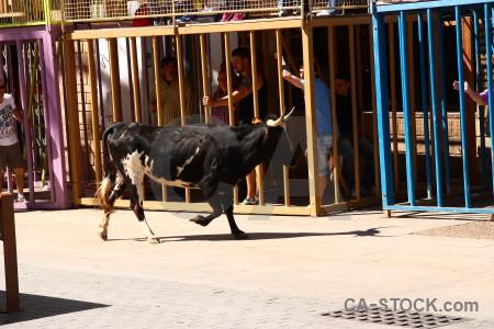 Spain animal bull running horn javea.