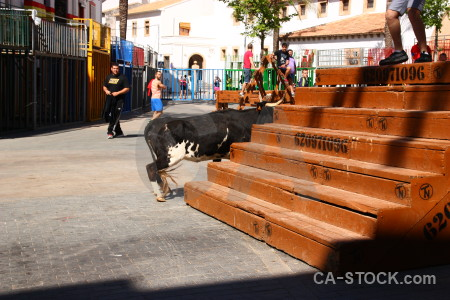 Spain animal orange bull running javea.