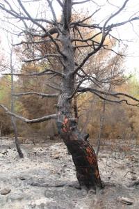 Spain ash montgo fire single javea.