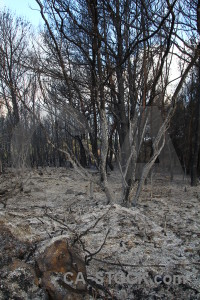 Spain ash tree europe burnt.