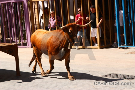 Spain bull europe running animal.