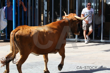 Spain bull javea animal white.