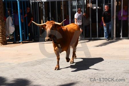 Spain bull running animal person europe.