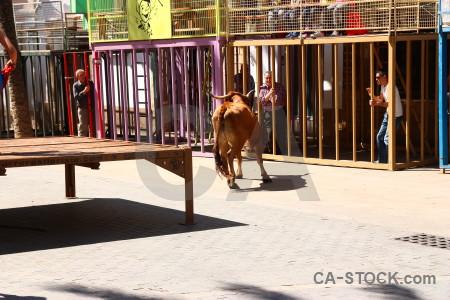 Spain bull running horn animal person.