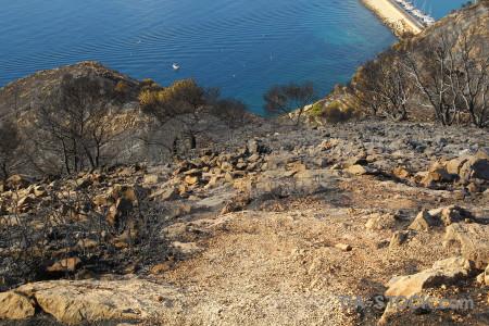 Spain burnt javea rock tree.