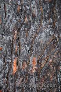 Spain burnt texture wood bark.