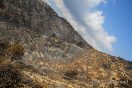 Spain burnt tree ash europe.