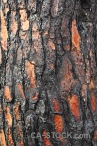 Spain burnt wood bark europe.