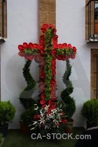 Spain cross flower plant red.