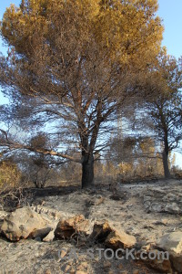 Spain europe ash javea rock.