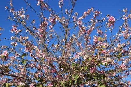 Spain europe blue sky flower.