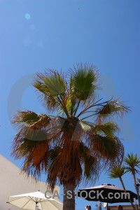 Spain europe palm tree javea.