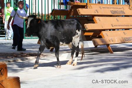 Spain horn bull europe animal.