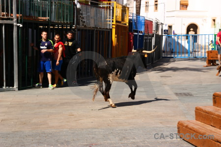 Spain horn bull person javea.
