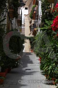 Spain javea green street plant.