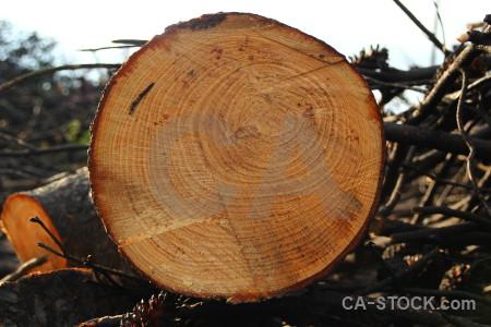 Spain log wood circle texture.