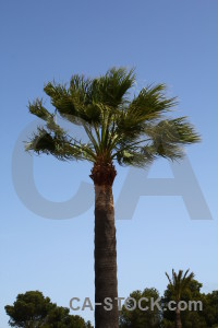 Spain palm tree sky javea blue.