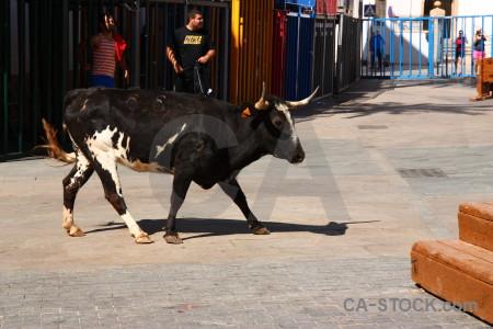 Spain person animal europe bull.