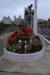 Spain plant valencia europe flower.