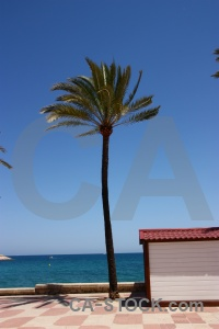 Spain sky sea palm tree javea.