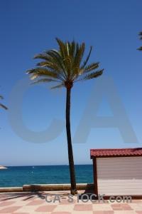 Spain sky sea palm tree javea.