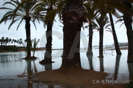 Spain storm white palm tree arenal.