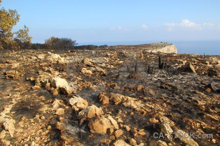 Spain tree burnt ash europe.