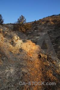 Spain tree europe montgo fire burnt.