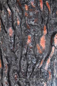 Spain wood europe javea texture.
