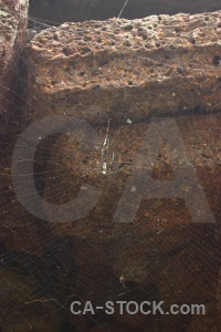 Spider stone web siem reap cambodia.
