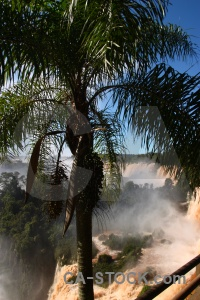 Spray tree water iguazu falls river.