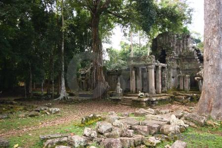 Stone lichen fungus block temple.