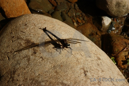 Stone new zealand insect dragonfly south island.