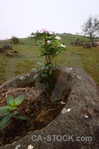 Stone phonsavan southeast asia megalithic laos.