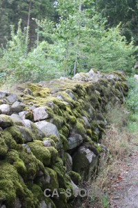 Stone plant wall green moss.