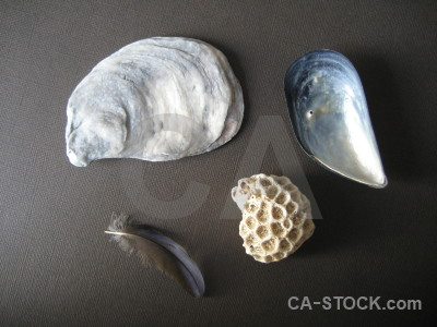 Stone shell feather coral object.