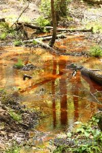 Stream karlskrona sweden grass log.