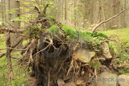 Stump brown green tree.