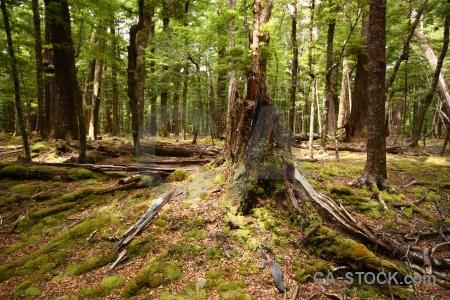 Stump leaf dead branch forest.