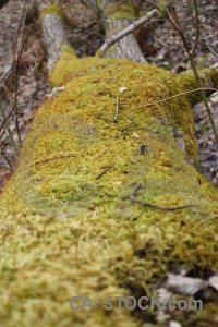 Stump tree.
