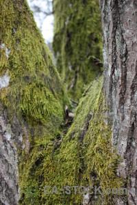 Stump tree green.