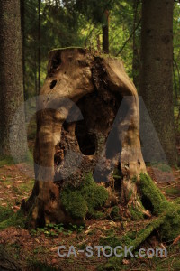 Stump tree green brown.